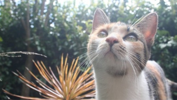 Cat circumnavigating the globe on yacht is quarantined in New Zealand